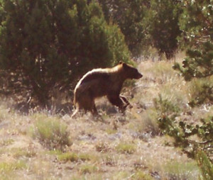 Young Bear in Navajo